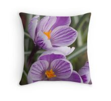 Spring has arrived - purple crocus Throw Pillow