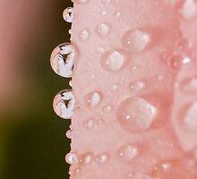 Petal Jewels by Lynne Morris