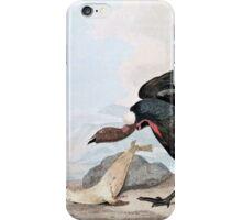 Condor Bird and Seal Vintage Art iPhone Case/Skin