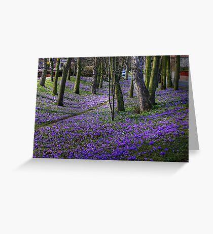 Crocus Carpet in March Greeting Card