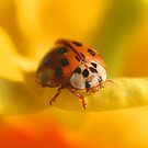 The Lady Bug by SKNickel