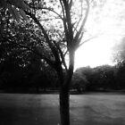 tree 2 by Jonathan Blades