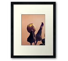 ©NS Rise On IA. Framed Print