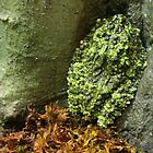 Vietnamese Mossy Frog by Laurel Talabere