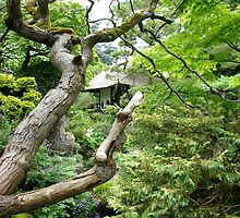 Japanese Garden in Kildare Ireland  by ciaramc31