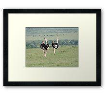 Ostrich in Masai Mara Framed Print