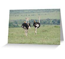Ostrich in Masai Mara Greeting Card