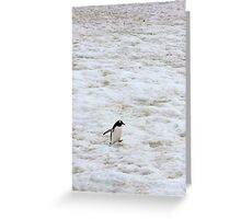"Gentoo Penguin ~ ""It's a long walk home"" Greeting Card"