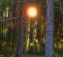 Sunflare in the Forest by Lyana Lynn