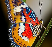 Multicoloured Malay Lacewing Butterfly by nics-pics