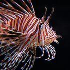 Lion Fish by Gene Praag