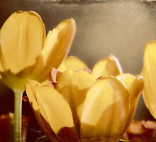 Rustic tulips by shalisa