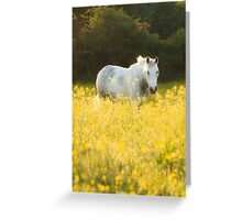 Buttercup Sunset Greeting Card