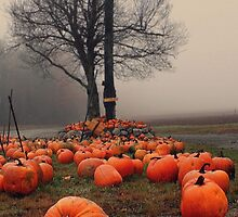 Pumpkins in the Mist by Patrick Downey