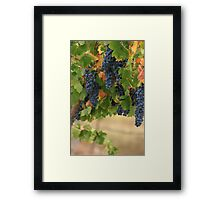 Full Vines Framed Print