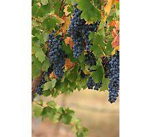 Full Vines Photographic Print