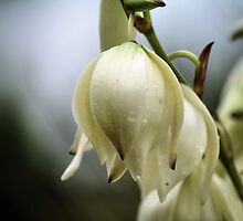 Southwestern Bells by Intheraine