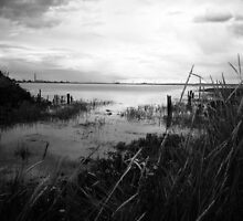 Medway Marshes by EdgarCat