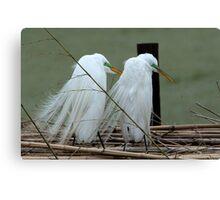 Avery Island Egrets--Marital Bliss Canvas Print