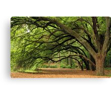 Stretching Giants Canvas Print