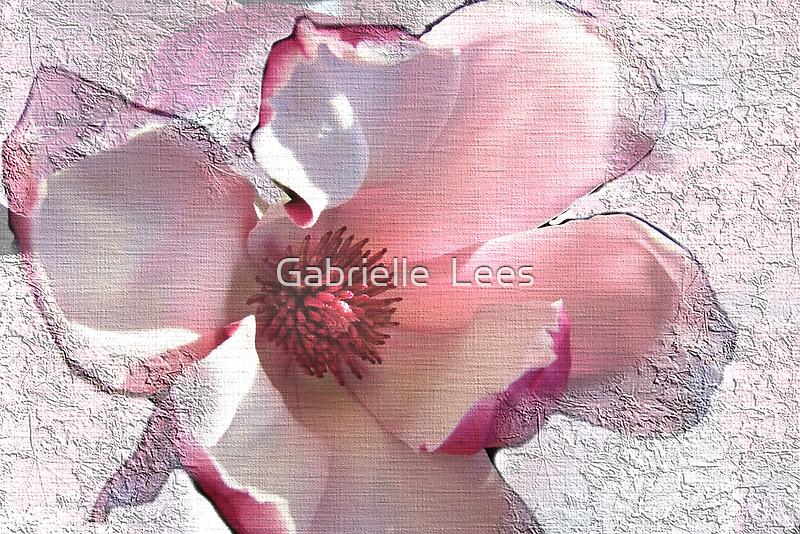 Sweet Magnolia Solangeana! by Gabrielle  Lees