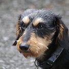 My Dog Carl by Lorelle Gromus