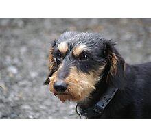My Dog Carl Photographic Print