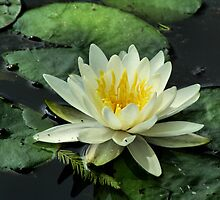 The Nature Of Buddha by Intheraine