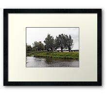 Waving willows Framed Print