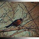 Robin Red Breast by Judi Taylor