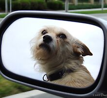 Car Ride by Dave Tunstall