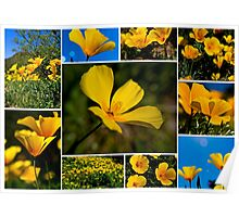 Mexican Poppy Collage Poster