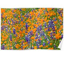 California Wild Flowers in Spring Poster
