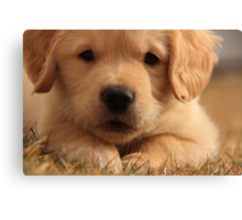 I am SO cute!... Canvas Print