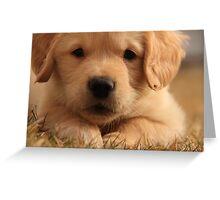 I am SO cute!... Greeting Card