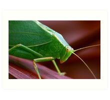 Jiminy plays Cricket Art Print