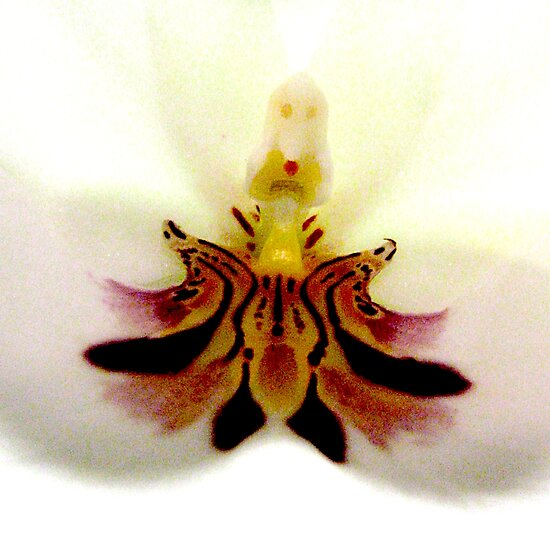 Little Princess - A New Perspective on Orchid Life by ©Ashley Edmonds Cooke