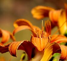 Orange and Green. Natures Colors by trueblvr
