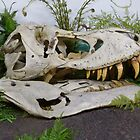 T-Rex Fossil by Vicki Spindler (VHS Photography)