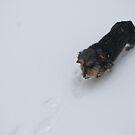 Snow Dog by Lorelle Gromus
