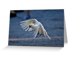 Sulphur Crested in Flight Greeting Card