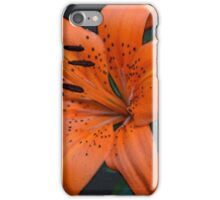 double golden orange tiger lily flowers close up photography. good for home, office wall decoration.  iPhone Case/Skin