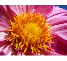 Beautiful Bloom Photographic Print