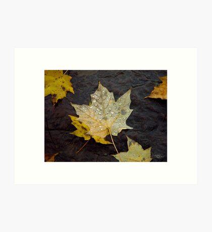 Dew Drop Maple Leaves Art Print