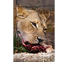 Lunch with Lions Photographic Print