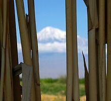 Mount Ararat so near yet so far by fortheloveofit