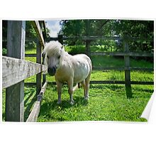 Solo The Shetland Pony Poster