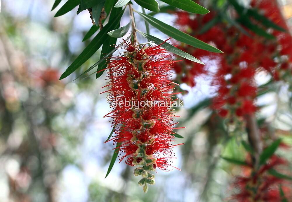 A colourful flower. by debjyotinayak