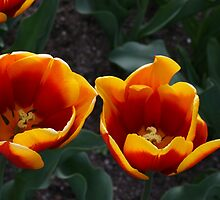Fire Twins by TraceyLea