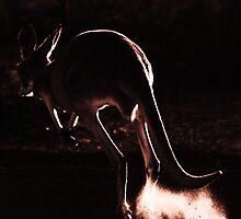 Silver Kangaroo by Josh Kennedy